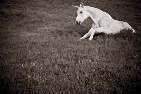 Solitary Unicorn